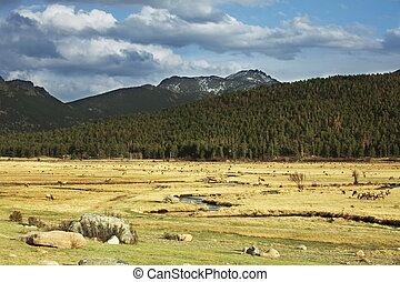 Rocky mountains - rocky mountains