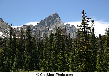 Rocky Mountains - Tall pines stand guard before the craggy...