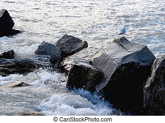 Rocky Perch - A seagull perches on some rocks near the...