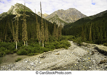 A view of a rocky river bed in the Alaska wilderness