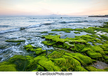 Rocky shore covered with green algae in the early morning with mountain views