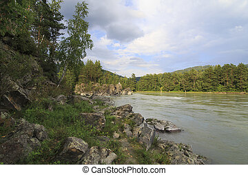 Rocky shore of a mountain river Katun with forest.