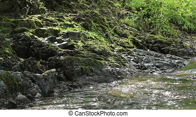 Rocky Shore with Green Moss - Rocky shore of a water stream...