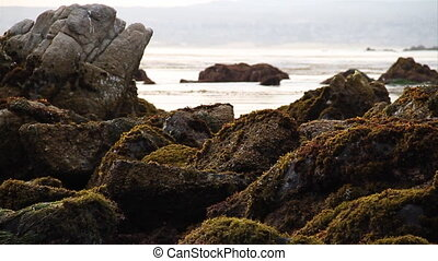 rocky shoreline with green moss and