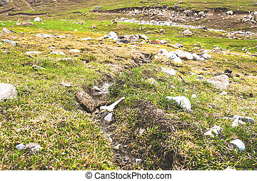 Rocky stones on the grass in hill