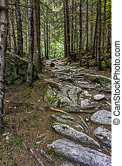 rocky walkway road at wild forest in mountain