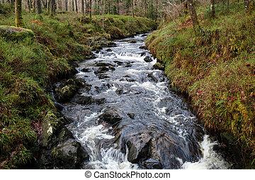 Rocky Winter River Scene in a Forest