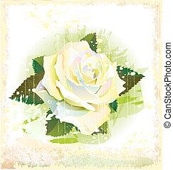 rocznik wina, biały, ilustracja, róża