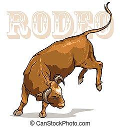 rodéo, taureau, isolé