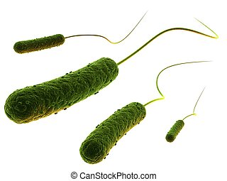 rod-shaped bacteria - 3d rendered close up of some isolated...