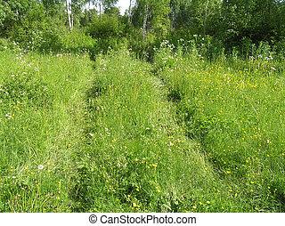 roda, trilhas, prado verde, luz solar