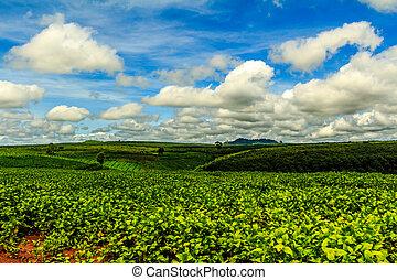 rodante, verde, debajo, colinas