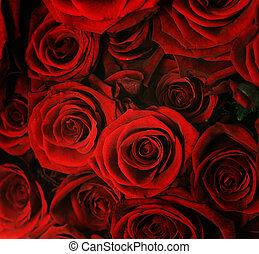 rode achtergrond, rozen