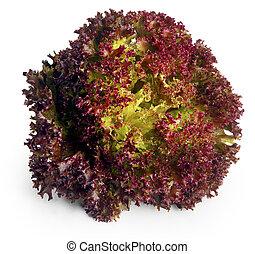 rode lettuce, bladeren
