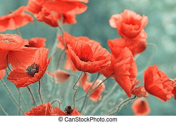 rode poppy, bloemen