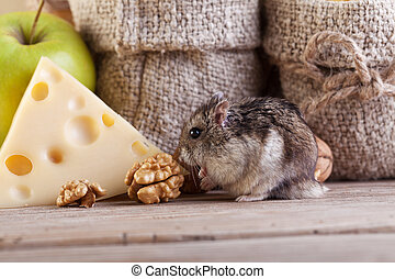 Rodent in the pantry - Hamster got into the pantry -...