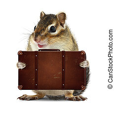 rodent with suitcase isolated on white, vacation concept