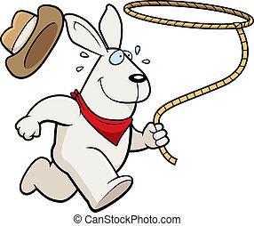 rodeo, coelho