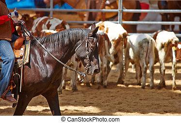 rodeo, competição, é, aproximadamente, começar