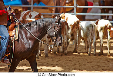 rodeo competition is about to begin