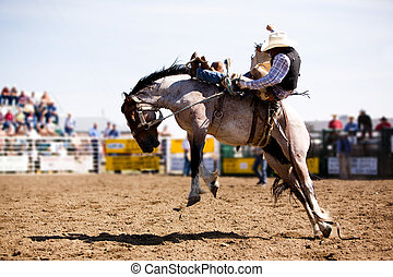 A saddle bronc rider at a local rodeo