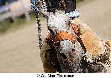 rodeo horse barrel racing