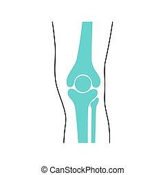 rodilla, anatomía, menisco, coyuntura