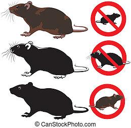 roditore, avvertimento, -, ratto, segni