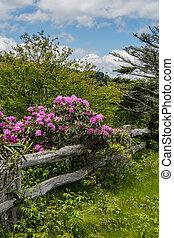 rododendron, virág, képben látható, öreg, wooden kerítés