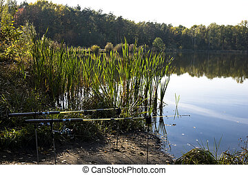 Rods on the water