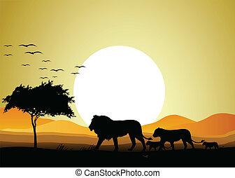 rodzina, lew, sylwetka