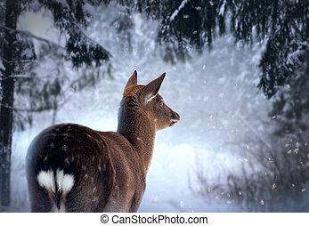 roe-dear, em, inverno, floresta