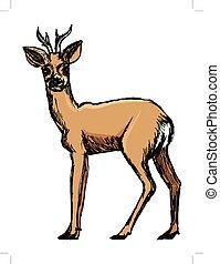 roe deer, forest animal - vector, coloured, sketch, hand...