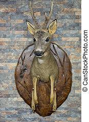 Roe deer head - View of Roe Deer head trophy