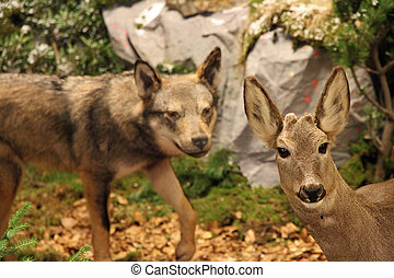 deer in mortal danger with the Wolf behind him is going to bite