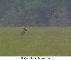 Roe gallops high grass