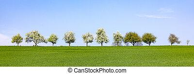 roeien, horizon, bomen, bloeien