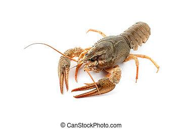 roh, fluß, crayfish