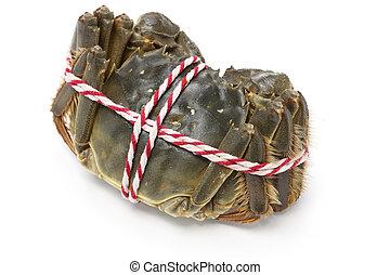 roh, shanghai, behaarter , crabs(female)