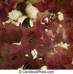 rojo, bougainvillea, plano de fondo