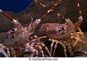 rojo, crustáceos