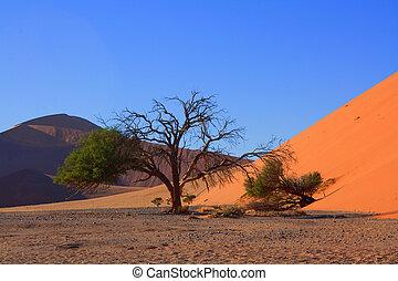 rojo, dunas, de, sossusvlei