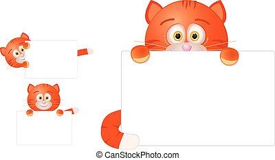 rojo, gato, con, muestra en blanco