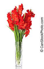 rojo, gladiolo, en, transparente, florero