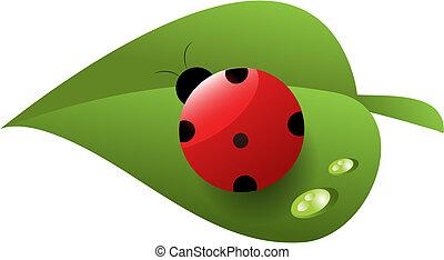 rojo, manchado, mariquita, en, hoja verde, con, rocío