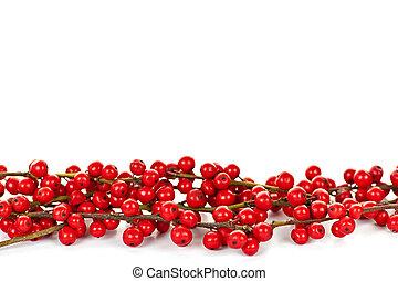 rojo, navidad, bayas, frontera