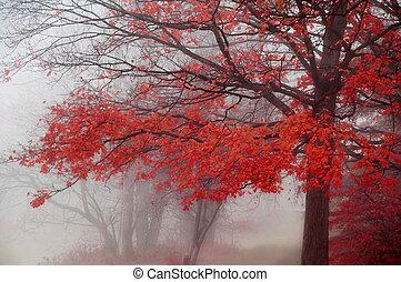 rojo, otoño