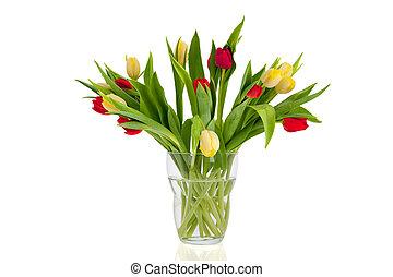 rojo y blanco, tulipanes