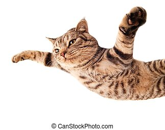rolig, flygning, kattunge