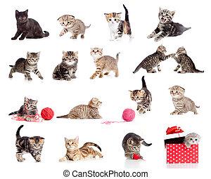 rolig, litet, kattungar, collection., isolerat, katter,...
